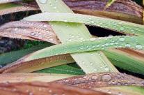 Wet Autumn Garden