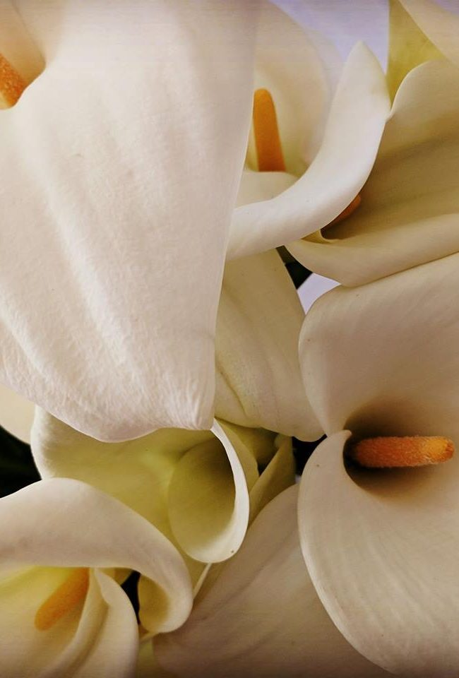 Lost in The Lillies – Geyserville, California