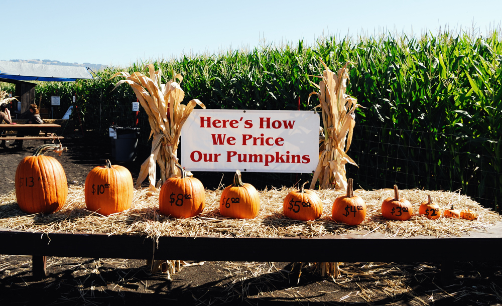 How We Price Our Pumpkins ~ Petaluma, CA