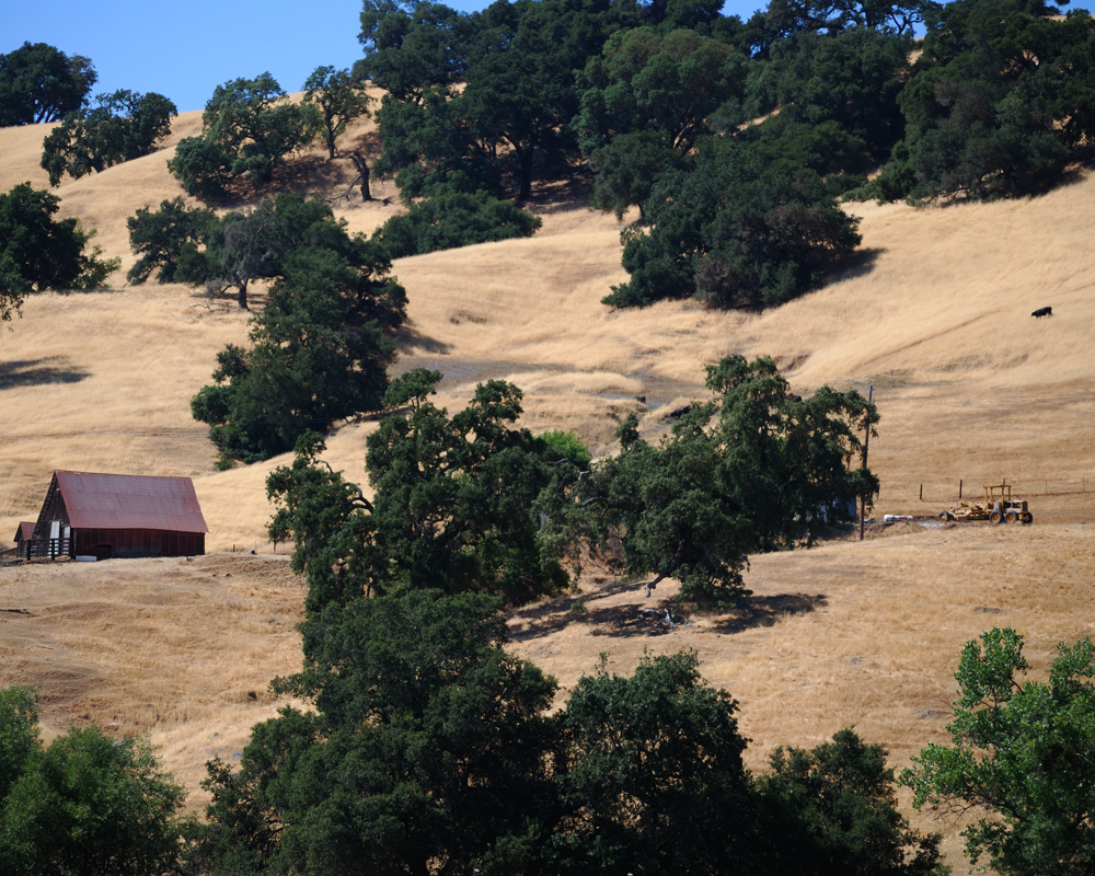 Barn, Tractor, Cow ~ Geyserville, CA