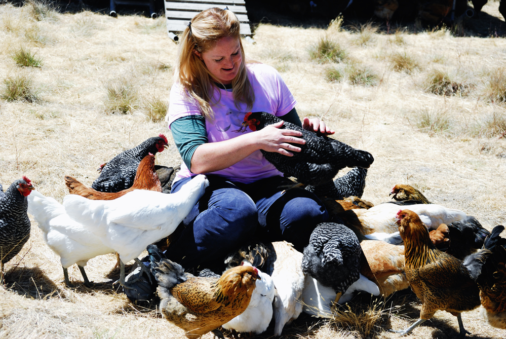 Mother Hen ~ Wise Acre Farm – Windsor, CA